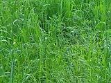 fuck in grass